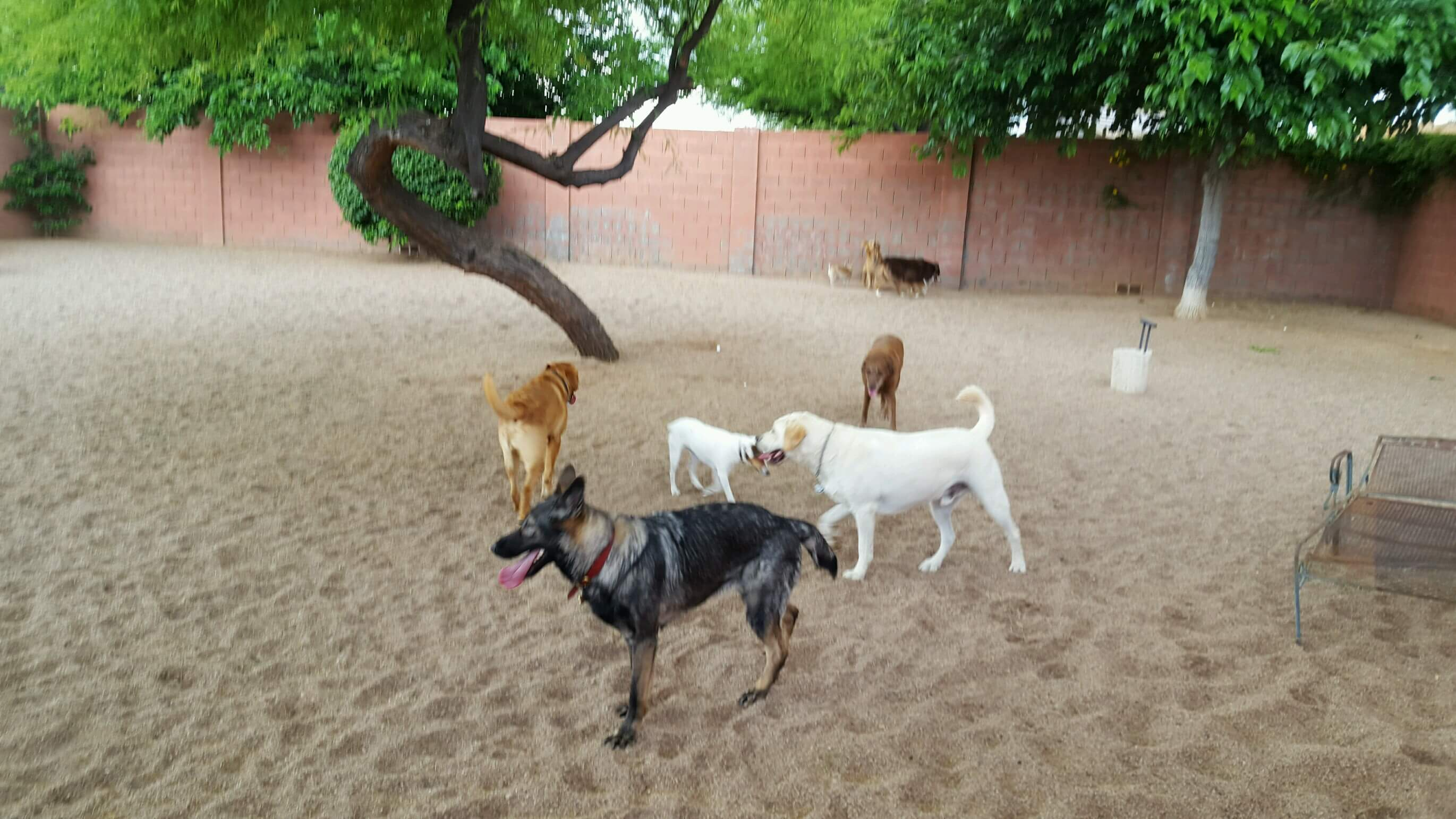 Dog Play Area